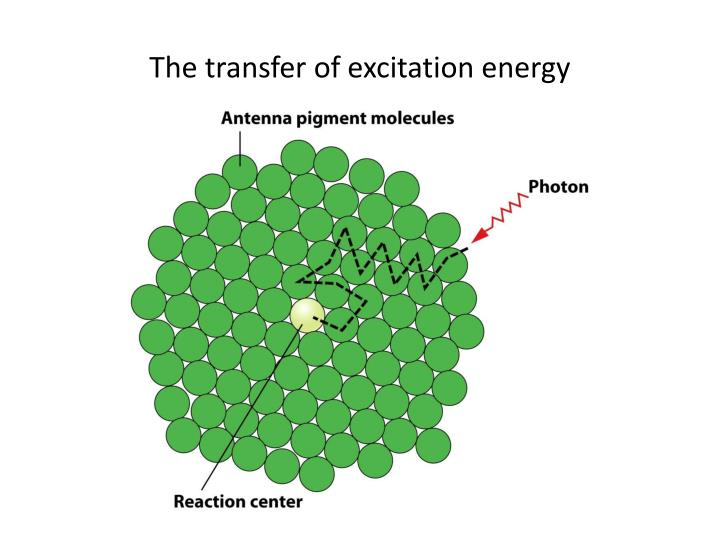 The transfer of excitation energy