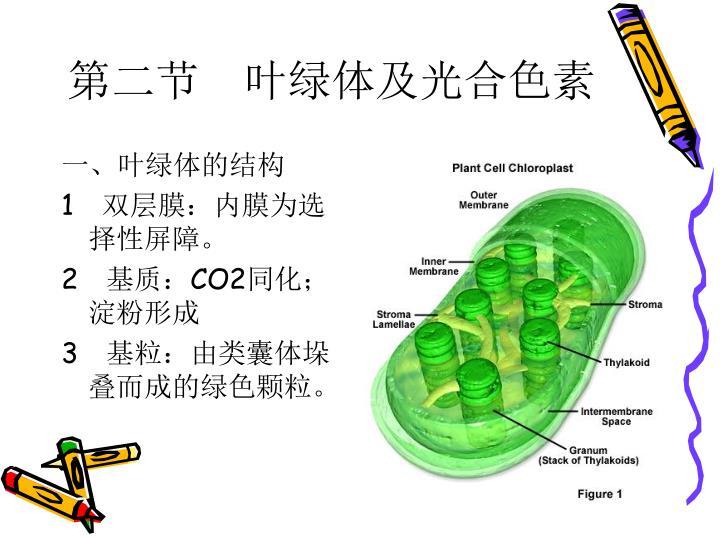 第二节 叶绿体及光合色素