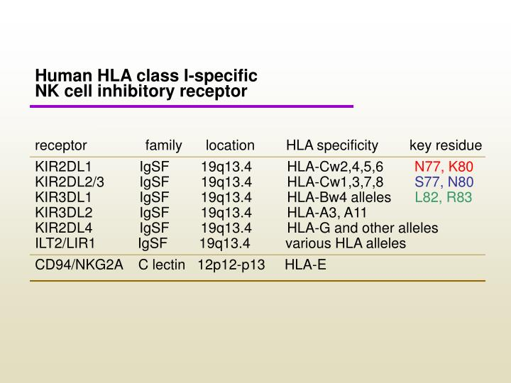 Human HLA class I-specific