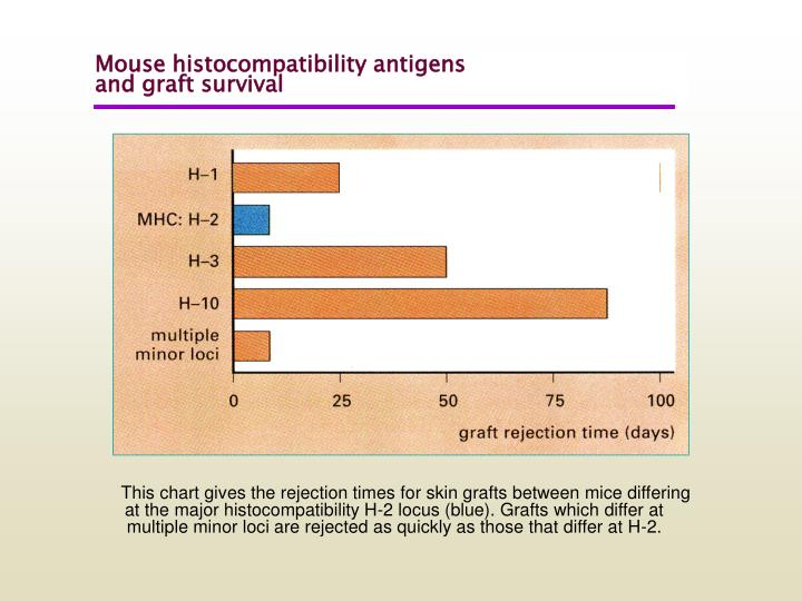 Mouse histocompatibility antigens