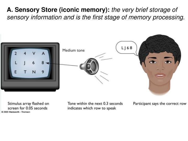 A. Sensory Store (iconic memory):