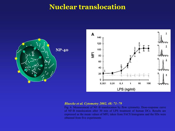 Nuclear translocation