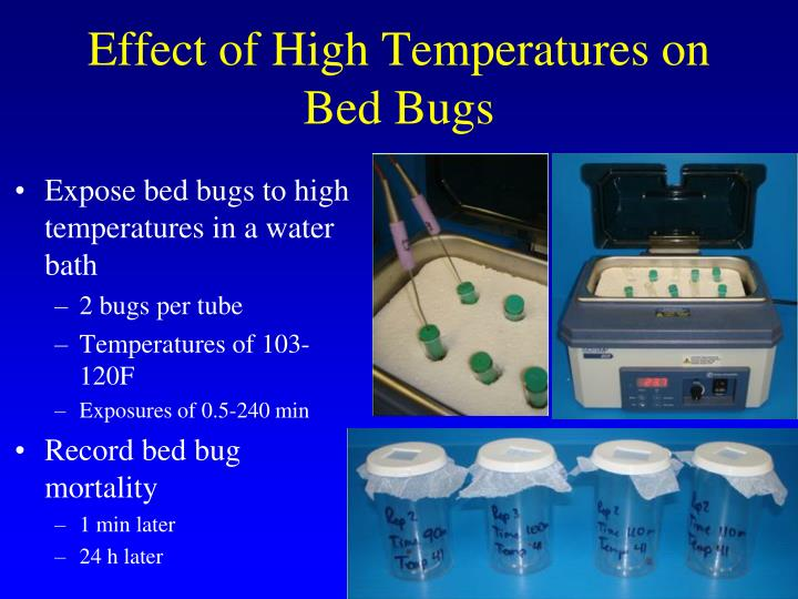 Effect of High Temperatures on Bed Bugs