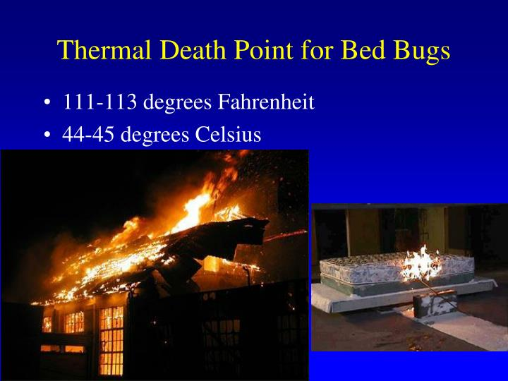 Thermal Death Point for Bed Bugs