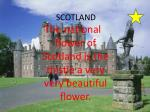 the national flower of scotland is the thistle a very very beautiful flower