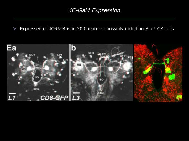4C-Gal4 Expression