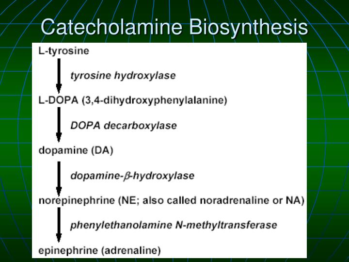 Catecholamine Biosynthesis