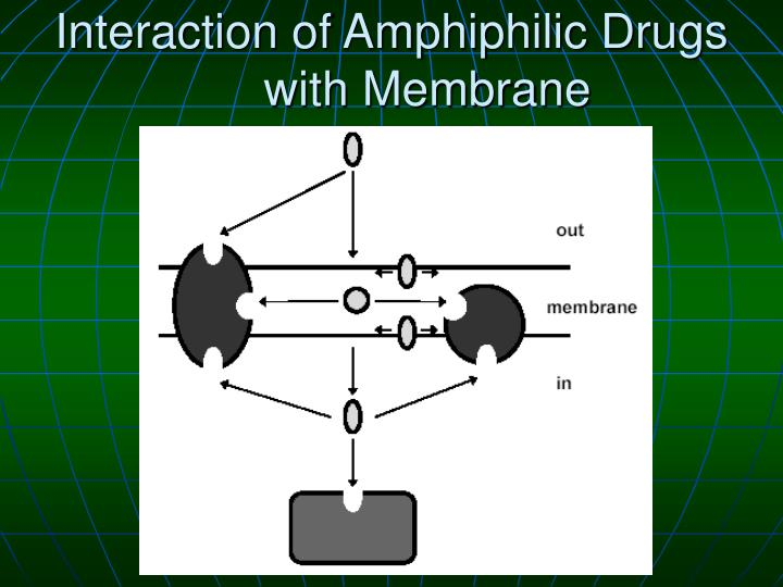 Interaction of Amphiphilic Drugs with Membrane