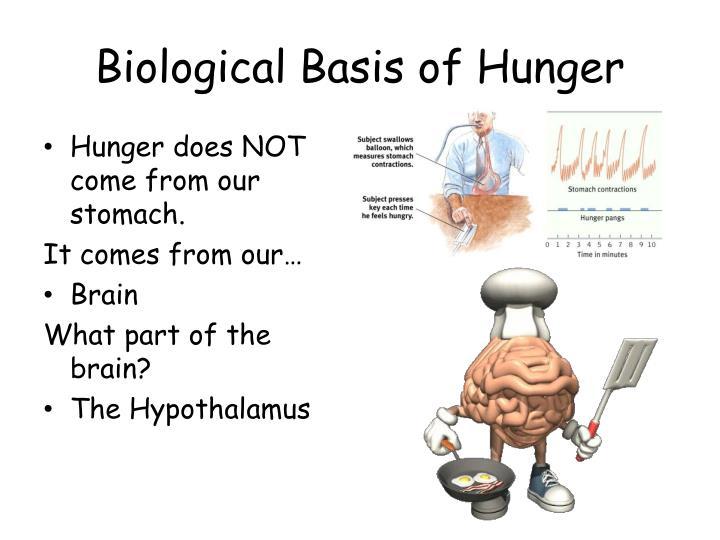 hunger arousing hormone