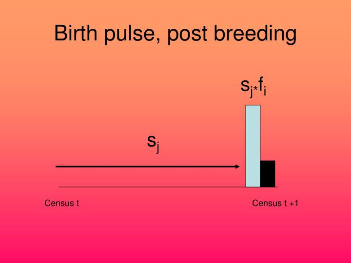 Birth pulse, post breeding