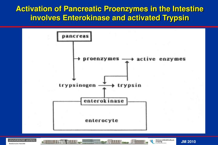 Activation of Pancreatic Proenzymes in the Intestine involves Enterokinase and activated Trypsin