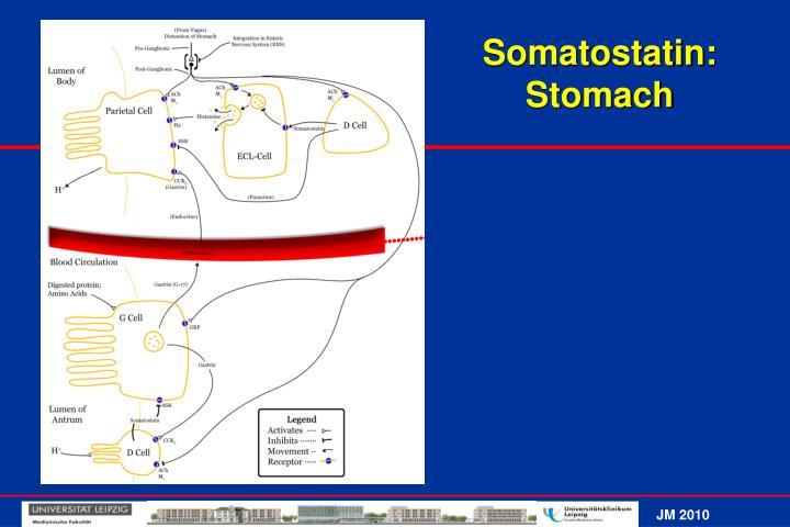Somatostatin: Stomach