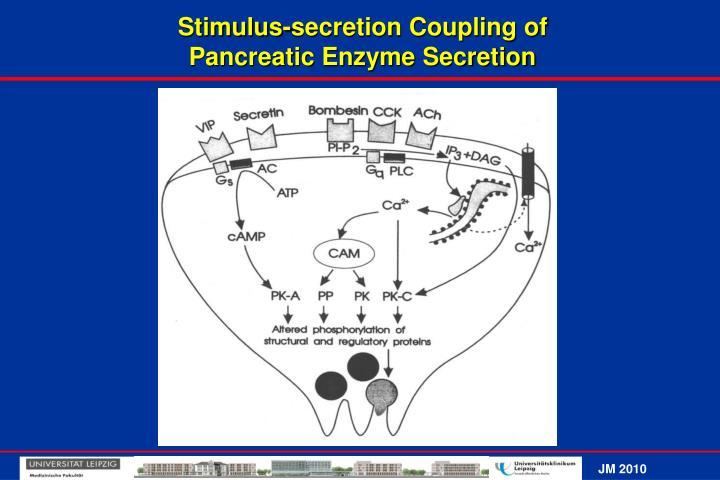 Stimulus-secretion Coupling of