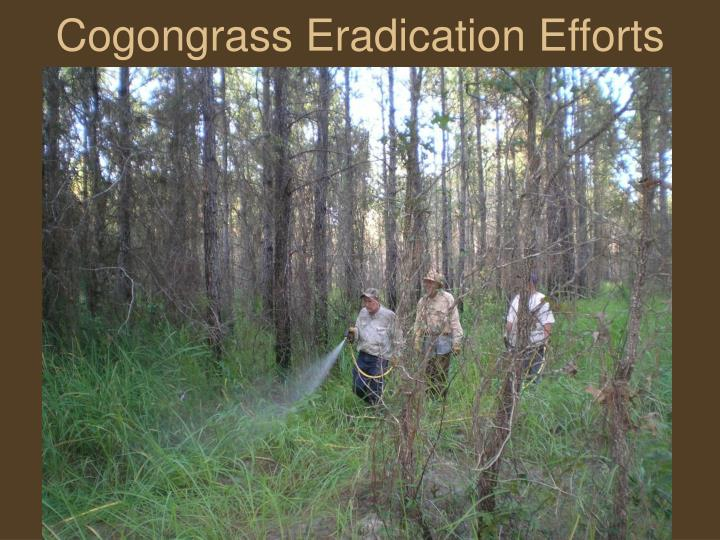 Cogongrass Eradication Efforts