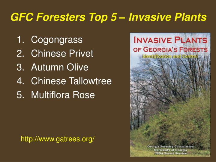 Gfc foresters top 5 invasive plants