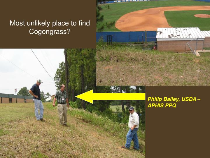 Most unlikely place to find Cogongrass?
