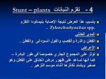 4 stunt plants