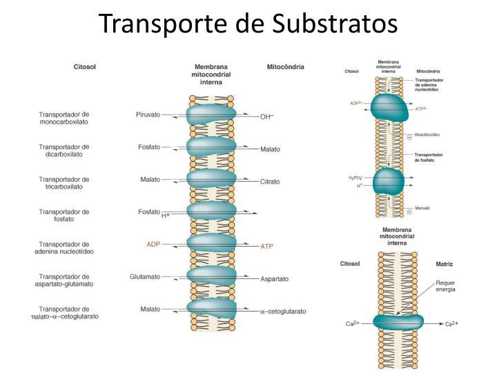 Transporte de Substratos