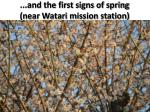and the first signs of spring near watari mission station