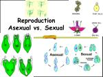 reproduction asexual vs sexual
