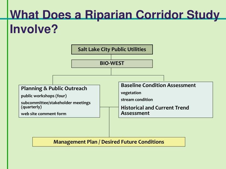 What Does a Riparian Corridor Study Involve?
