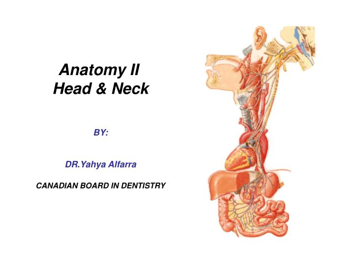 anatomy ii head neck by dr yahya alfarra canadian board in dentistry n.