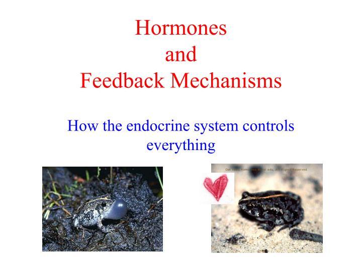 hormones and feedback mechanisms n.