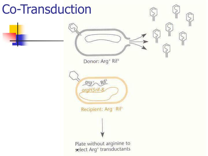 Co-Transduction