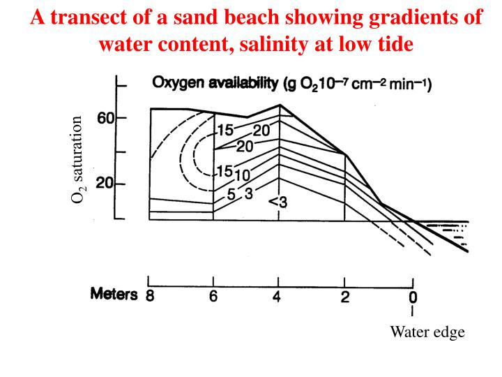 A transect of a sand beach showing gradients of water content, salinity at low tide