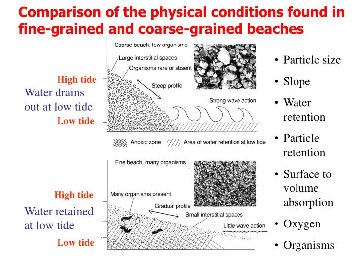 Comparison of the physical conditions found in fine-grained and coarse-grained beaches