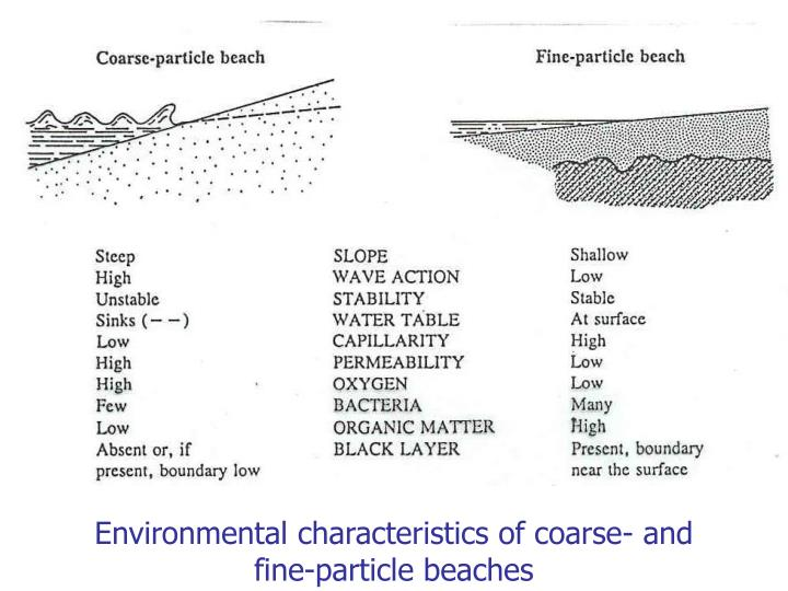Environmental characteristics of coarse- and fine-particle beaches