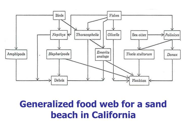 Generalized food web for a sand beach in California