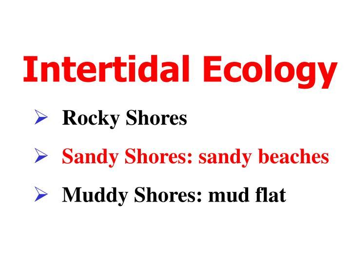 intertidal ecology n.