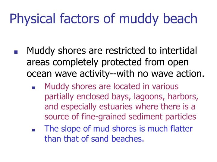 Physical factors of muddy beach