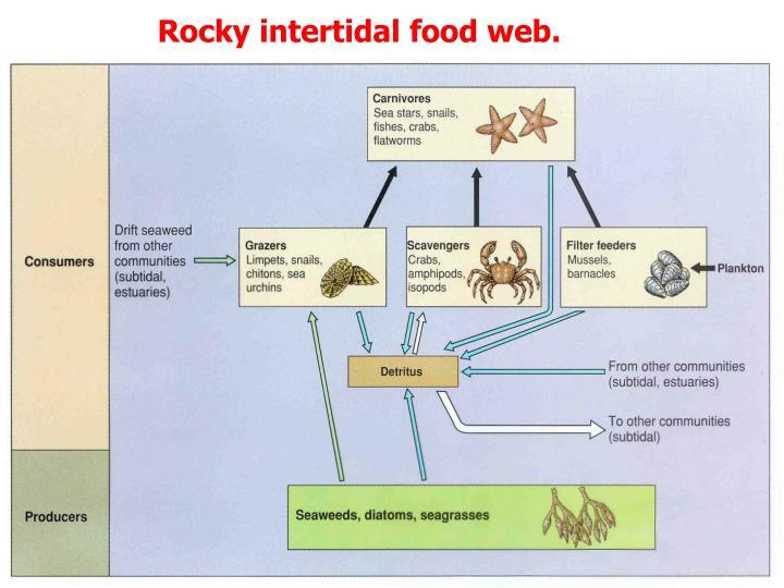 Rocky intertidal food web.