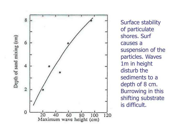 Surface stability of particulate shores. Surf causes a suspension of the particles. Waves 1m in height disturb the sediments to a depth of 8 cm. Burrowing in this shifting substrate is difficult.