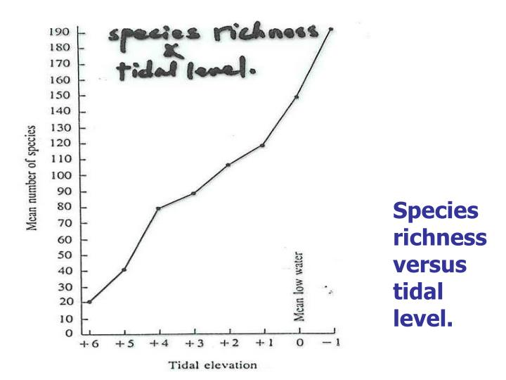 Species richness versus tidal level.