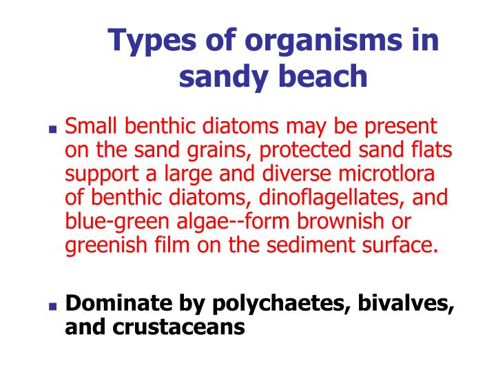 Types of organisms in sandy beach