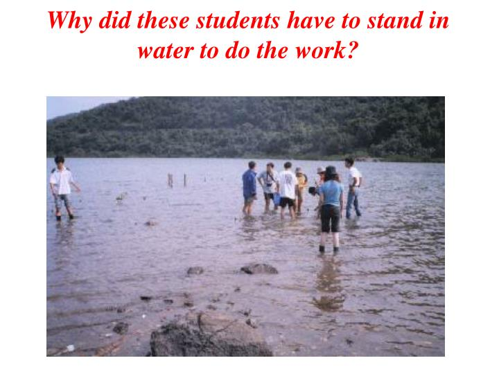 Why did these students have to stand in water to do the work?