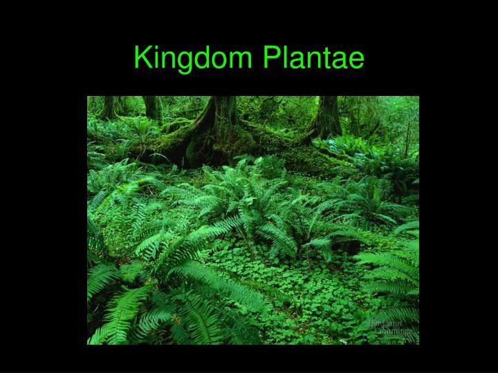kingdom plantae n.