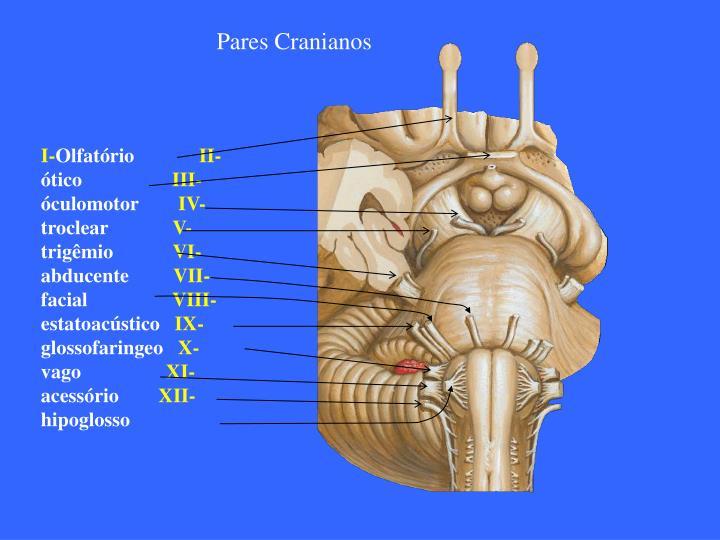 Pares Cranianos