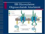er glycosylation oligosaccharide attachment