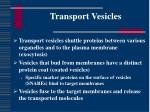 transport vesicles