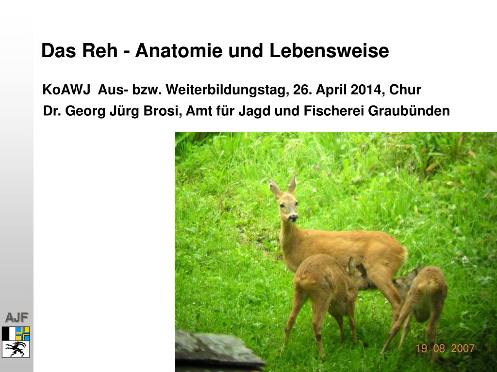 PPT - Das Reh - Anatomie und Lebensweise PowerPoint Presentation ...
