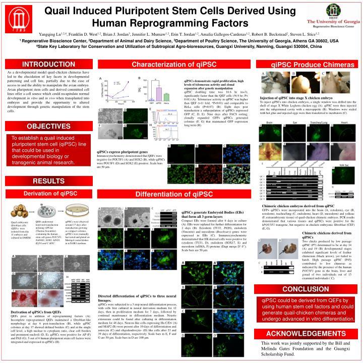 Quail Induced Pluripotent Stem Cells Derived Using Human Reprogramming Factors