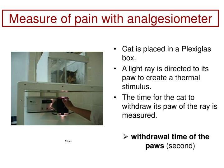 Measure of pain with analgesiometer