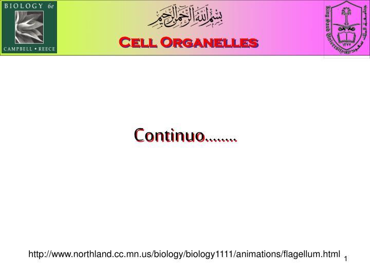 cell organelles n.