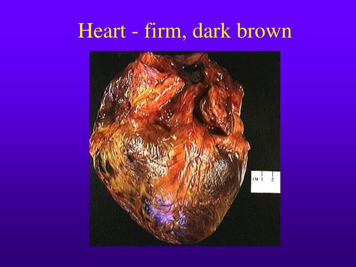 Heart - firm, dark brown
