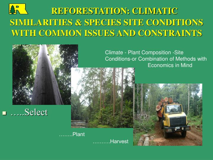 reforestation climatic similarities species site conditions with common issues and constraints n.