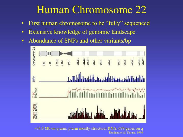 Human Chromosome 22